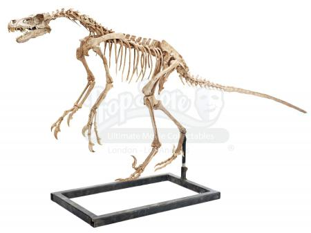Lot #472 - JURASSIC WORLD: FALLEN KINGDOM (2018) - Diorama Room Five-foot-Nine Velociraptor Skeleton